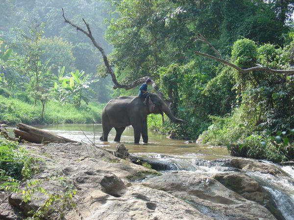 In einem Elefantenpark bei Chiang Mai...